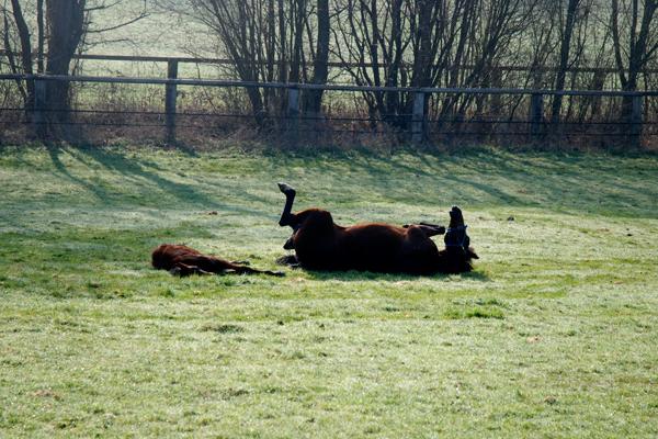 élevage Haras de Mardilly