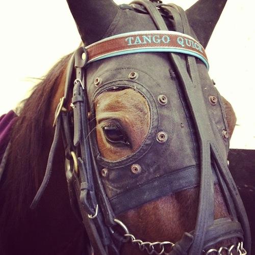 Tango Quick